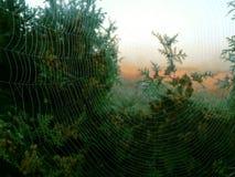 De kunst van spinnen Royalty-vrije Stock Foto