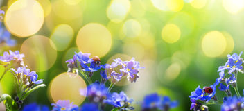 De kunstlente of de zomerachtergrond met vergeet-mij-nietjebloem Stock Afbeelding