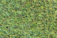 De kunstmatige achtergrond van de grastextuur stock afbeeldingen