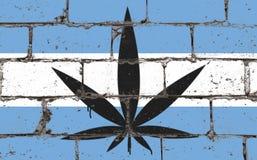 De kunstnevel die van de graffitistraat op stencil trekken Cannabisblad op bakstenen muur met vlag Argentinië stock fotografie