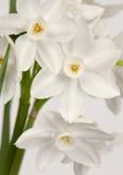 De kunstontwerp van bloemen. De kaart van de de dagvakantie van de valentijnskaart Stock Foto's
