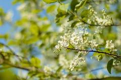 De kunstontwerp van de de lentebloesem Boomgaardscène Tot bloei komende boom met zonnestralen Mooie groene aardachtergrond Stock Foto