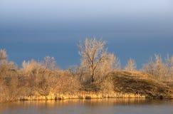 De Kust die van het meer in het Gouden Zonlicht van de Ochtend gloeit Stock Afbeelding