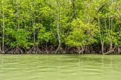 De kust en het mangrovenbos in de baai van Phang Nga Stock Foto