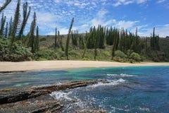 De kust endemische pijnboom Nieuw-Caledonië van het landschapsstrand Stock Afbeelding