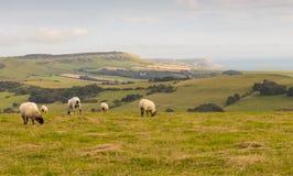 De kust het UK van Dorset royalty-vrije stock fotografie