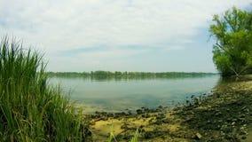 De kust van de rivier, wolken, riet, golven en stock videobeelden
