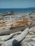 De kust van de Staat van Washington Stock Afbeelding