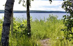 De kust van een meer in de zomer Stock Foto