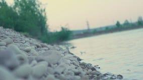De kust van de geheimzinnige rivier met heel wat ronde stenen stock videobeelden