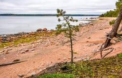 De kust van de Golf van Finland op een bewolkte de herfstdag Rotsen o Stock Foto