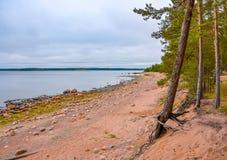 De kust van de Golf van Finland op een bewolkte de herfstdag Rotsen o Stock Foto's