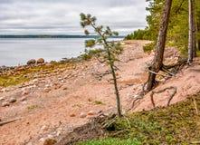 De kust van de Golf van Finland op een bewolkte de herfstdag Rotsen o Royalty-vrije Stock Foto's