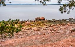 De kust van de Golf van Finland op een bewolkte de herfstdag Rotsen o Royalty-vrije Stock Fotografie