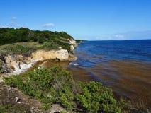 De kust van Heilige Felix in Guadeloupe en sargasses royalty-vrije stock foto