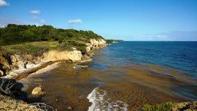 De kust van Heilige Felix in Guadeloupe en sargasses royalty-vrije stock afbeeldingen
