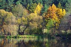 De kust van het meer in de vroege lente Stock Foto's