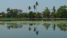 De kust van het meer en de palmen stock footage