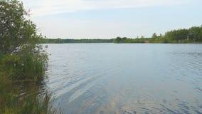 De kust van het meer, rivier, vijver stock video