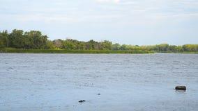 De kust van het meer, rivier, vijver Rimpelingen op het water stock video