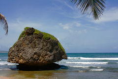 De kust van het oosten van Barbados stock afbeeldingen