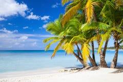 De kust van het Saonaeiland, Dominicaanse republiek Royalty-vrije Stock Foto