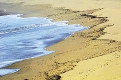 De kust van het skelet stock afbeeldingen