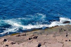 De kust van Newfoundland Royalty-vrije Stock Foto's