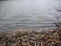 De kust van de vijver is één van de dagen van de herfst stock foto