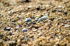 De kust van de Zwarte Zee met geel zand dat en kleine shells wordt uitgestrooid royalty-vrije stock afbeeldingen