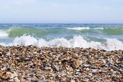 De kust van de Zwarte Zee met zeeschelpen royalty-vrije stock foto's