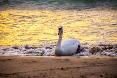 De kust van de Zwarte Zee, Varna, Bulgarije Stock Afbeeldingen