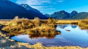 De Kustbergen die Pitt River en Pitt Lake in Fraser Valley van Brits Colombia Canada omringen stock foto's