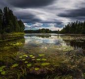 De kusten van meerfoldsjoen in de zomertijd, Noorwegen Mooi boreaal bosmeer stock fotografie