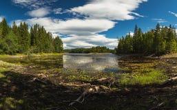 De kusten van meerfoldsjoen in de zomertijd, Noorwegen Mooi boreaal bosmeer stock afbeeldingen