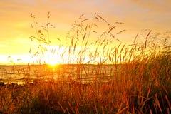 De kustgras van het meer bij zonsondergang stock afbeeldingen