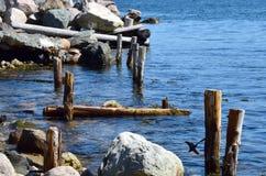 De kustlijn van de conceptiebaai dichtbij Haven belangrijkst-Kapel ` s inham-Lakeview NL Canada royalty-vrije stock fotografie