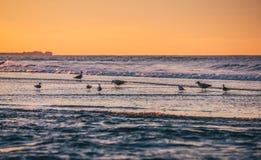 De kustlijn van de Atlantische Oceaan Stock Fotografie