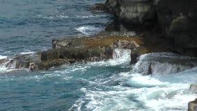 De kustlijn van Hawaï door de Vreedzame oceaan wordt geslagen die stock footage