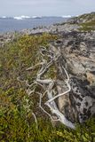 De kustlijn van het Fogoeiland, rots, vegetatie, ijsbergen Royalty-vrije Stock Afbeeldingen