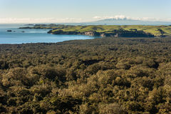 De kustlijn van Nieuw Zeeland met tropisch regenwoud stock afbeeldingen