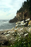 De kustportretten van Oregon stock afbeeldingen