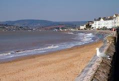 Zeemeeuw Exmouth Devon Engeland Royalty-vrije Stock Afbeeldingen