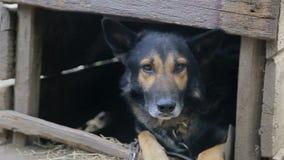 De kwade hond, de hond kijkt agressief, stock videobeelden