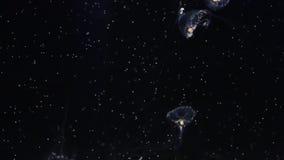 De kwallen van Timaformosa stock videobeelden