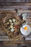 De kwartels nestelen met bevlekte eieren, lepel, gebroken ei op een plaat Stock Foto
