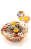De kwartelseieren van Pasen met kip stock afbeeldingen