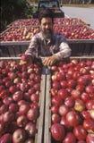 De kweker van de appel royalty-vrije stock foto