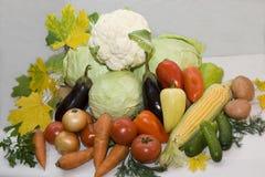De légume toujours durée Légumes frais sur un fond clair Photographie stock