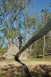 De l'adolescence sur une passerelle tombée d'arbre Photos stock